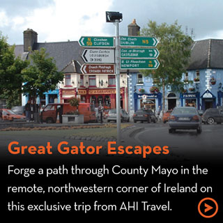 Great Gator Escapes