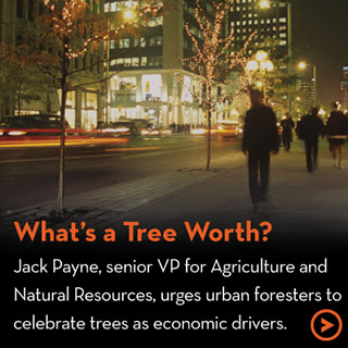 What's a Tree Worth?