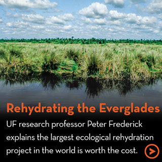 Rehydrating the Everglades